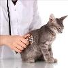 Ветеринарные клиники в Озерске